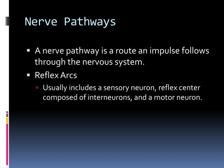 Nerve Pathways