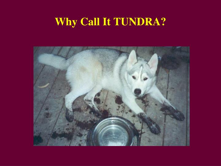 Why Call It TUNDRA?