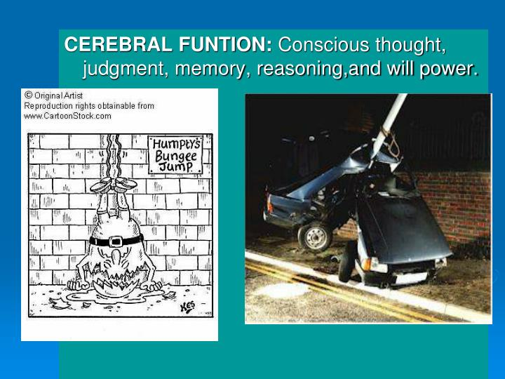 CEREBRAL FUNTION:
