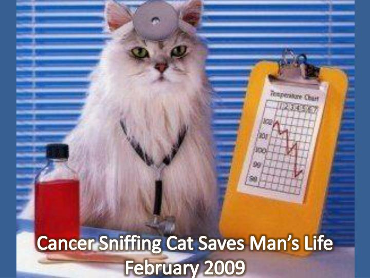 Cancer Sniffing Cat Saves Man's Life