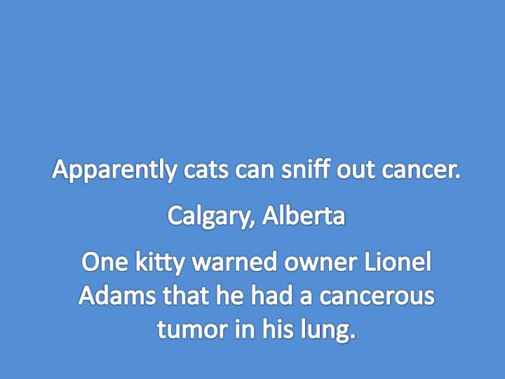 Apparently cats can sniff out cancer.