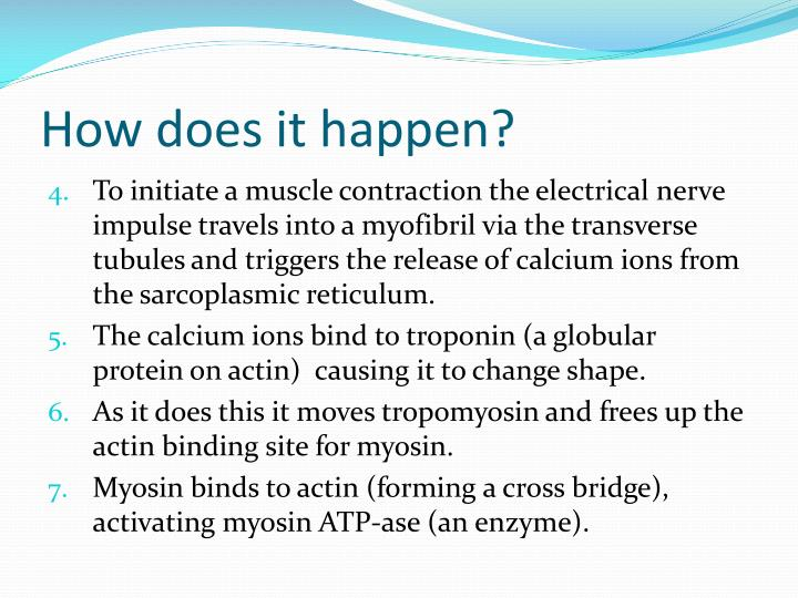sliding filament theory of muscle contraction pdf