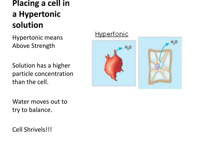 Placing a cell in a Hypertonic solution