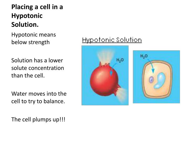 Placing a cell in a Hypotonic Solution.