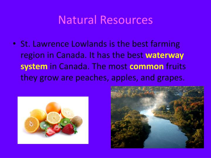 Natural Resources Birds Powerpoint