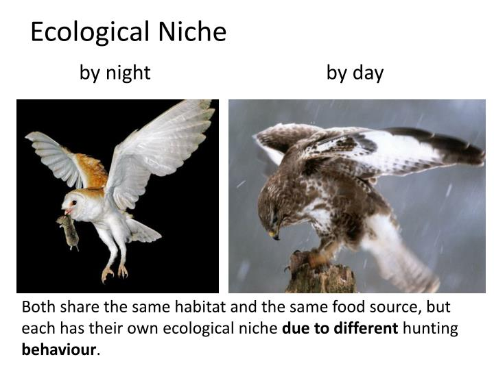 Ecological Niche