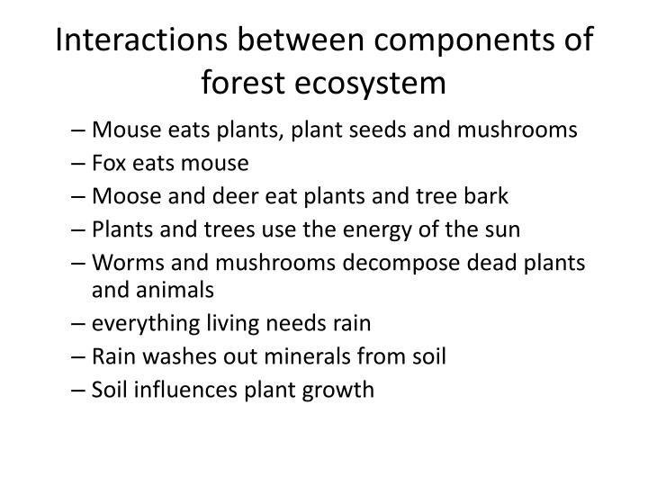 Interactions between components of forest ecosystem