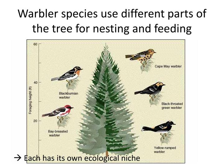 Warbler species use different parts of the tree for nesting and feeding