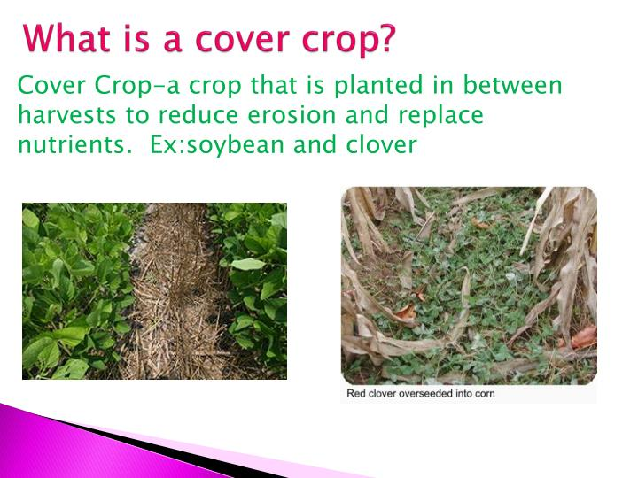What is a cover crop?