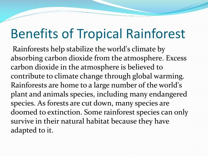 Benefits of Tropical Rainforest
