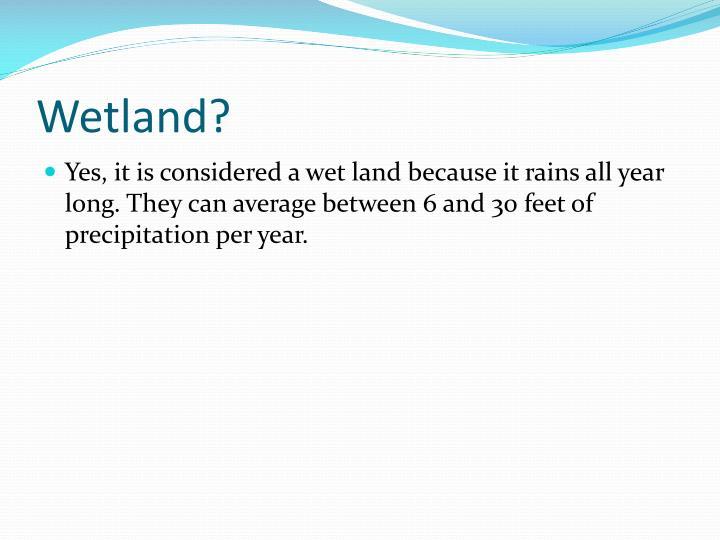 Wetland?