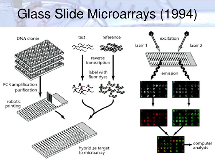 Glass Slide Microarrays (1994)