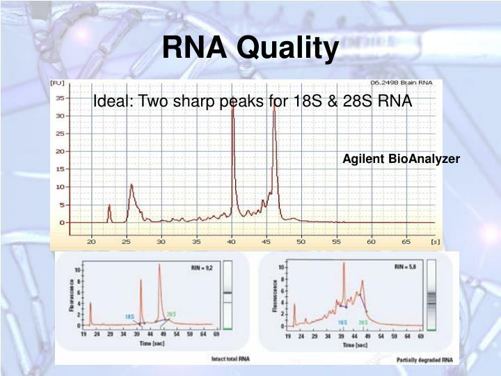 RNA Quality