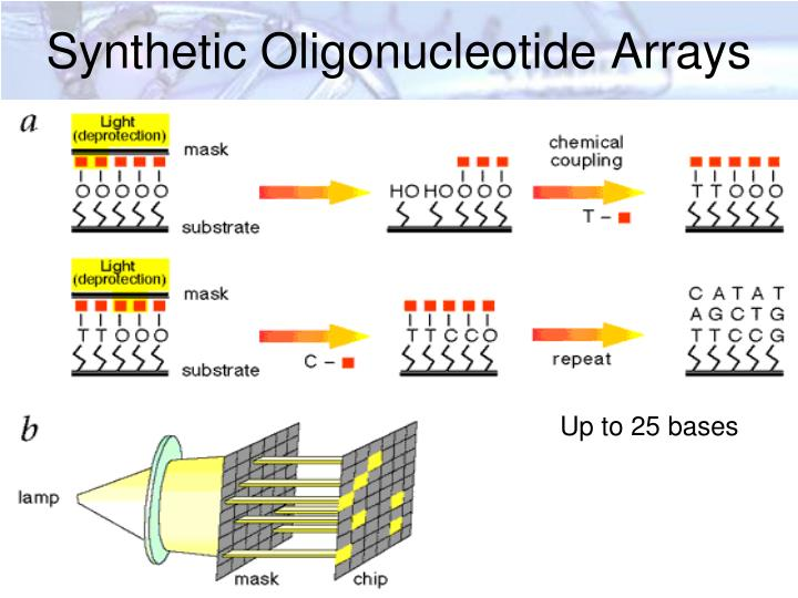Synthetic Oligonucleotide Arrays