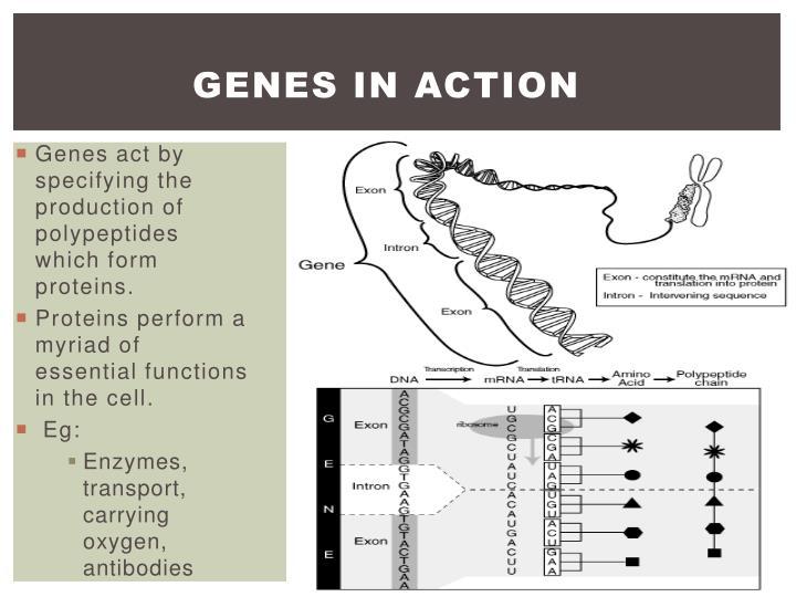 Genes in action