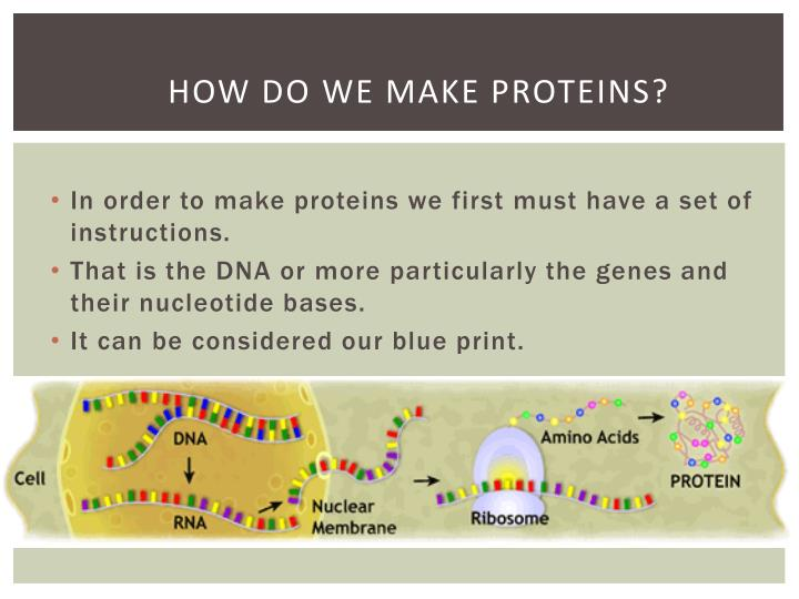 How do we make proteins?