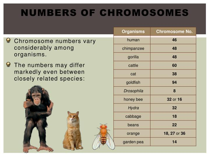 Numbers of Chromosomes
