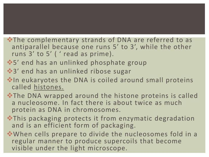 The complementary strands of DNA are referred to as antiparallel because one runs 5' to 3', while the other runs 3' to 5' ( ' read as prime).