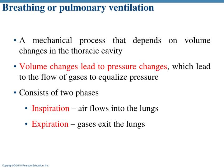 Breathing or pulmonary ventilation