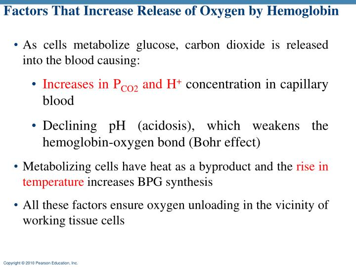 Factors That Increase Release of Oxygen by Hemoglobin