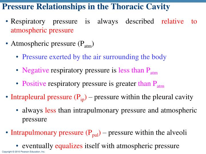Pressure Relationships in the Thoracic Cavity