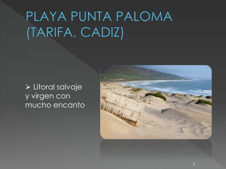 PLAYA PUNTA PALOMA (TARIFA, CADIZ)