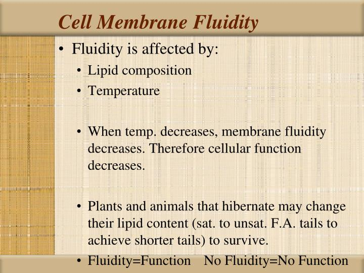 Cell Membrane Fluidity