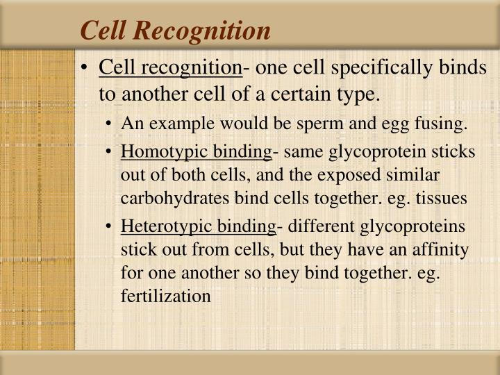 Cell Recognition