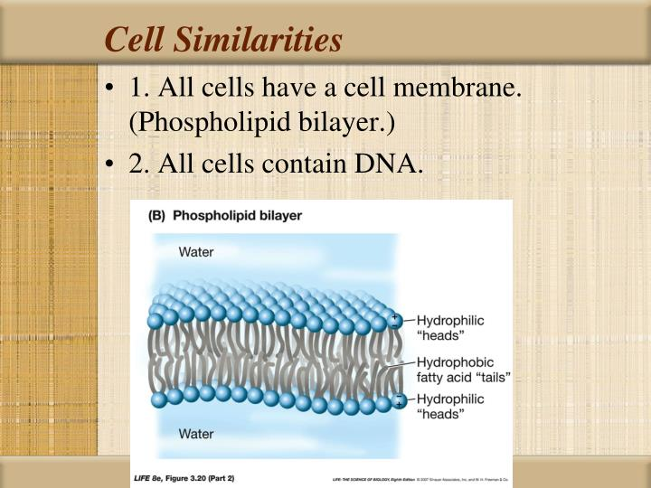 Cell Similarities