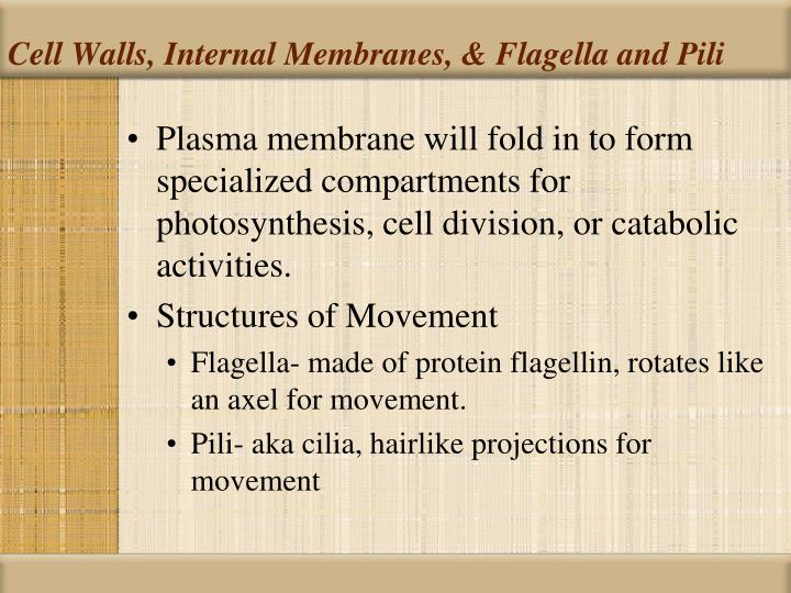 Cell Walls, Internal Membranes, & Flagella and