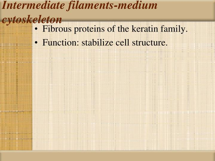 Intermediate filaments-medium