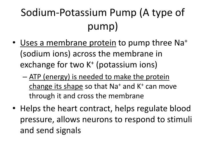 Sodium-Potassium
