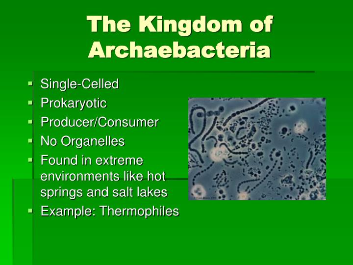 The kingdom of archaebacteria
