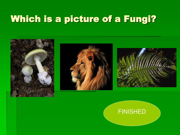 Which is a picture of a Fungi?