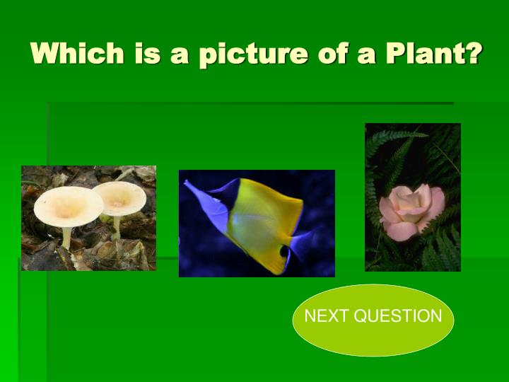 Which is a picture of a Plant?