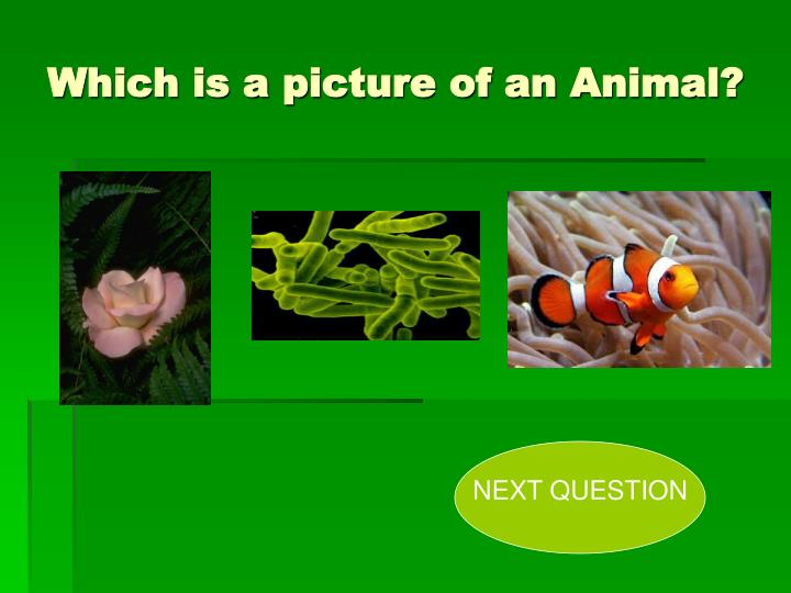 Which is a picture of an Animal?