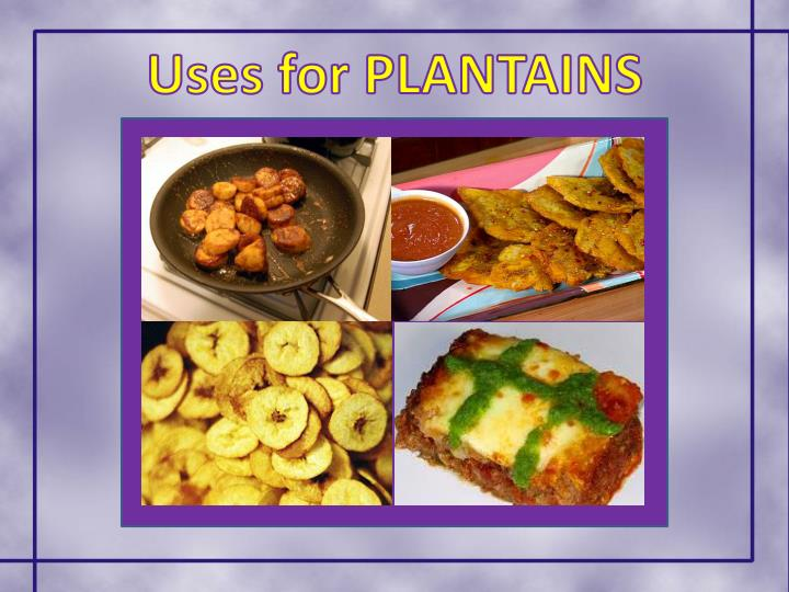 Uses for PLANTAINS