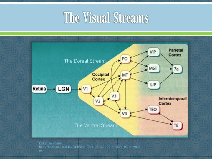 The Visual Streams