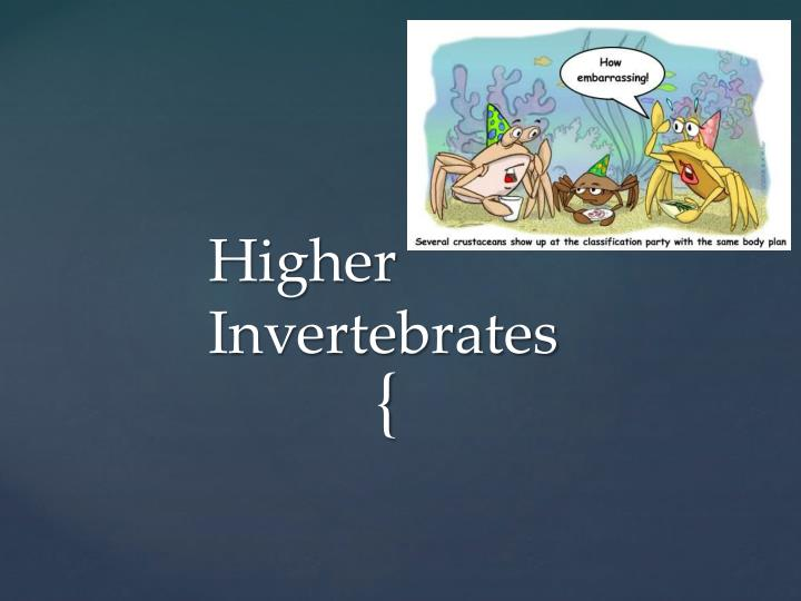 Higher Invertebrates