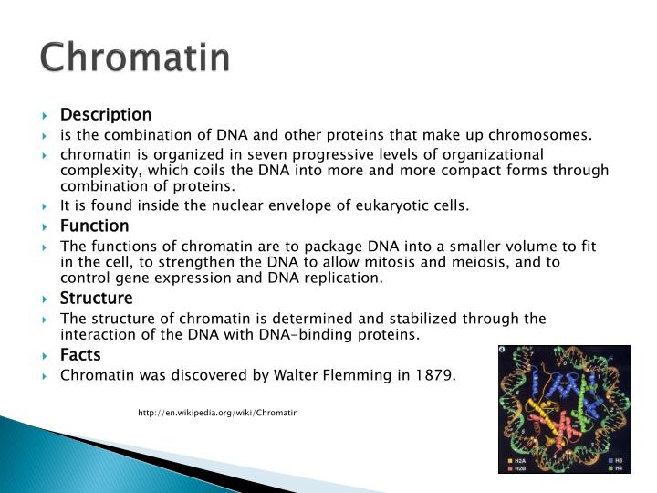 PPT 1 3 Cell Structures PowerPoint Presentation ID 1923761