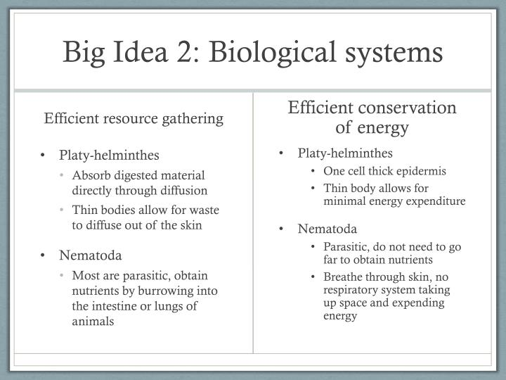 Big Idea 2: Biological systems