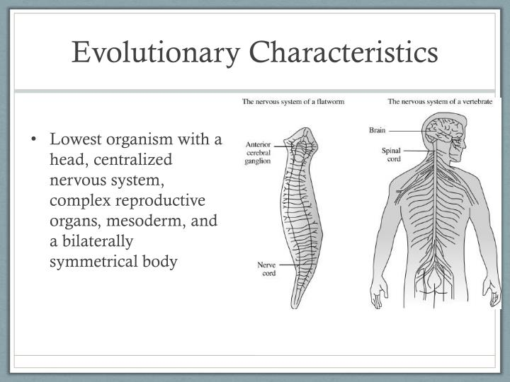 Evolutionary Characteristics