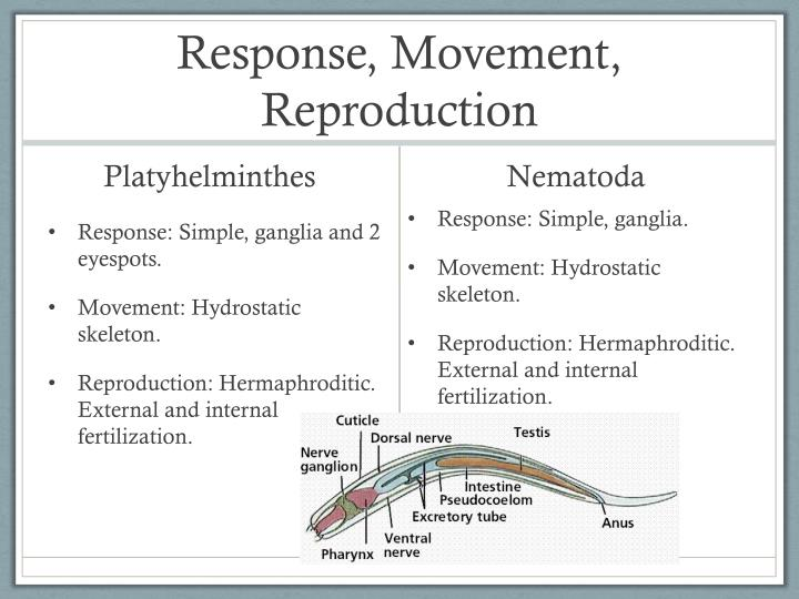 Response, Movement, Reproduction
