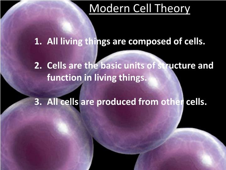 an analysis of the development of the cell theory by schleiden In the gradual development and emergence of the cell theory what i shall here  present on the relation  a careful analysis of these statements shows that they.