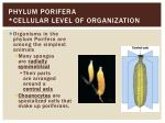 phylum porifera cellular level of organization