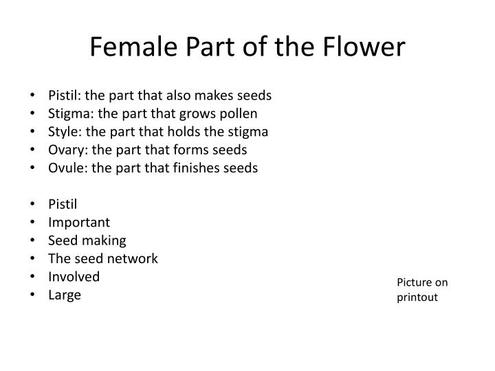 Female Part of the Flower