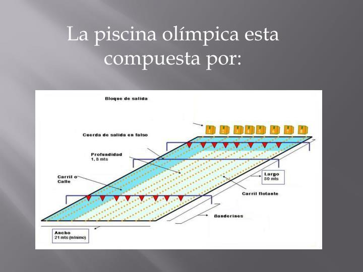 La piscina olímpica esta compuesta por: