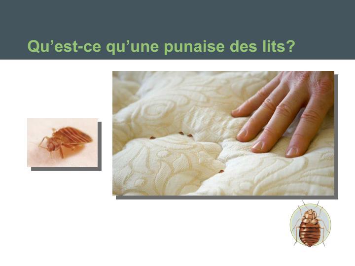 Qu'est-ce qu'une punaise des lits?
