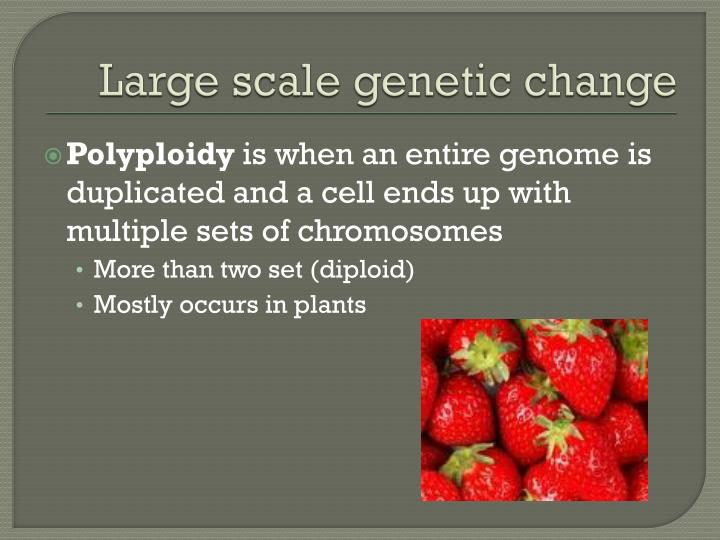 Large scale genetic change