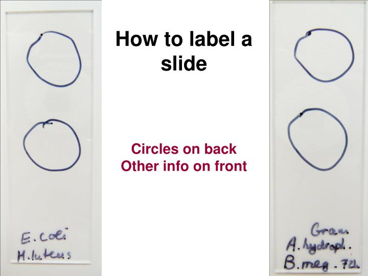 How to label a slide
